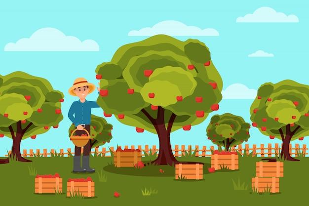 Садовник, сбор яблок в корзине. фруктовая ферма. природный ландшафт. деревянные ящики с урожаем. плоский дизайн