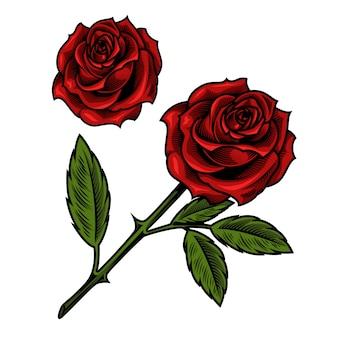 単一の美しい赤いバラ