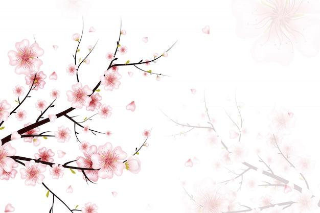 春の背景。ピンクの花、つぼみ、花びらが落ちる春咲く枝のイラスト。白い背景に現実的です。咲く桜の小枝。