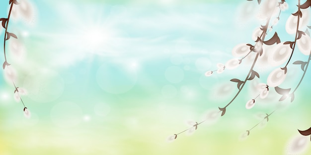 Весенний фон. природа фон с ветвями ивы и солнца. весенние ветви.