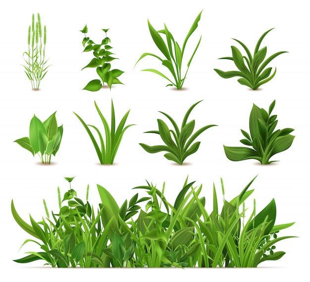 緑の現実的な春の草。新鮮な植物、庭の季節の成長草、植物性グリーン、ハーブ、葉のアイコンを設定します。自然の芝生の草原の茂み、花の植生の境界線