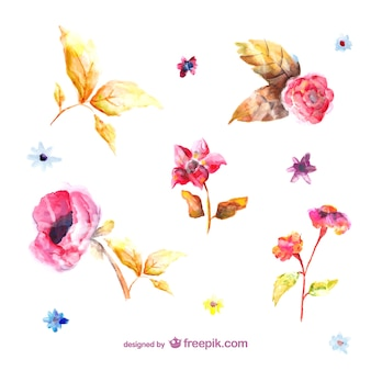 Акварель цветы иллюстрации
