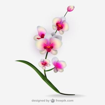 Художественный белый вектор орхидеи