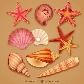 現代の美しい貝殻のアイコンベクトル