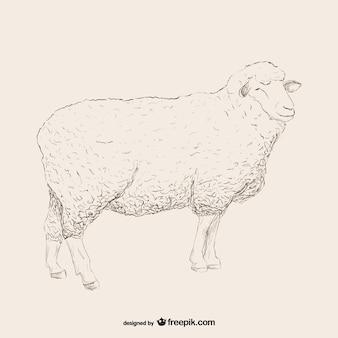 羊のスケッチのイラスト