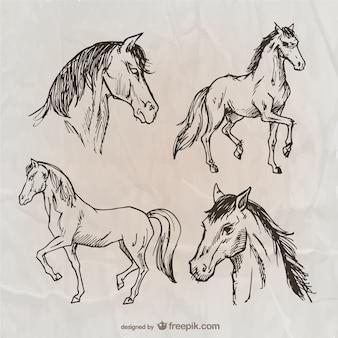Вьючных лошадей