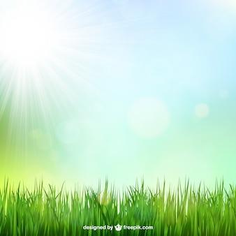 太陽の光と緑の芝生の背景