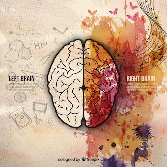 Мозговые полушария