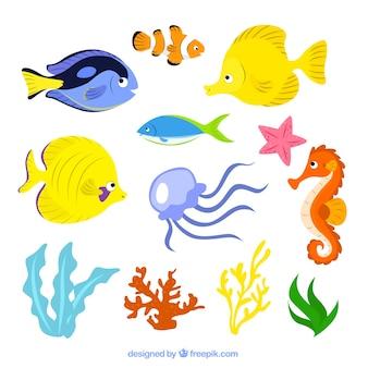 海洋生物のイラスト