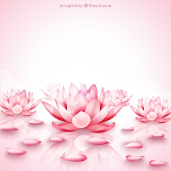 Розовые цветы лотоса фон