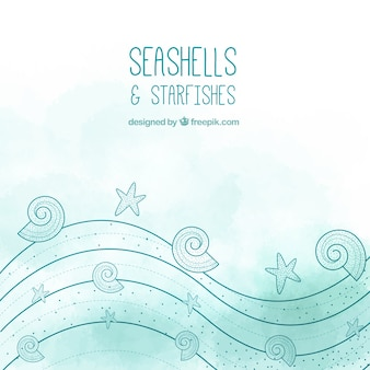 Раковины и морских звезд