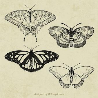 レトロな蝶