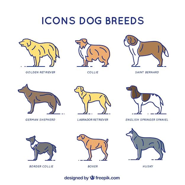 Собака породы