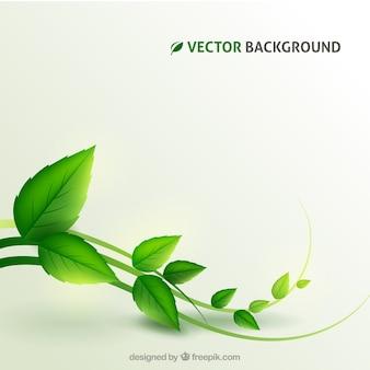 植物の背景
