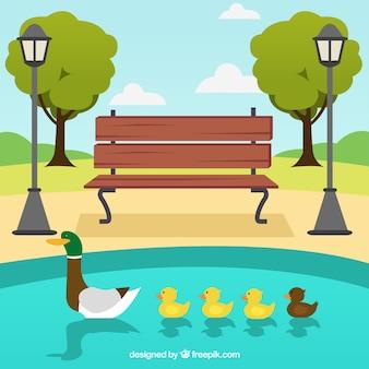 湖のアヒルの家族と公園