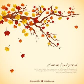 葉の背景を持つ木の枝