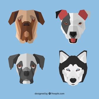 Геометрические лица собаки