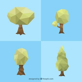 多角形の木の品種