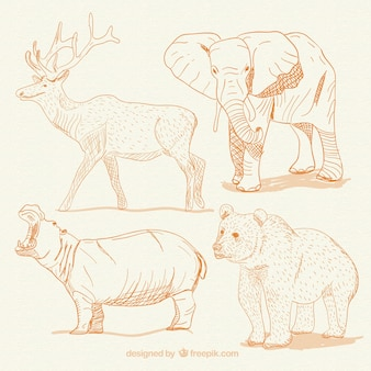 手描きの動物