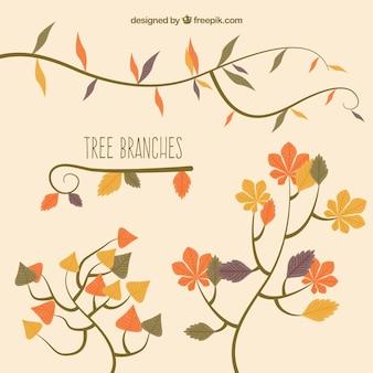 Осенние ветви деревьев