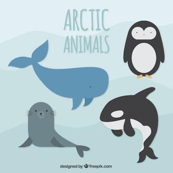 北極の動物