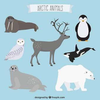 北極の動物コレクション