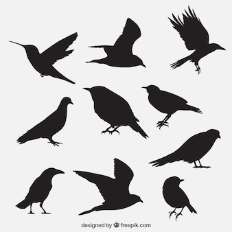 Птица излагаются коллекцию
