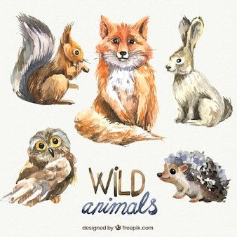 水彩画の野生動物