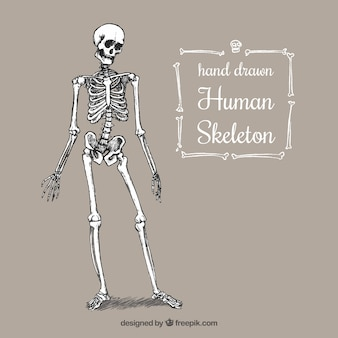 Ручной обращается человеческий скелет
