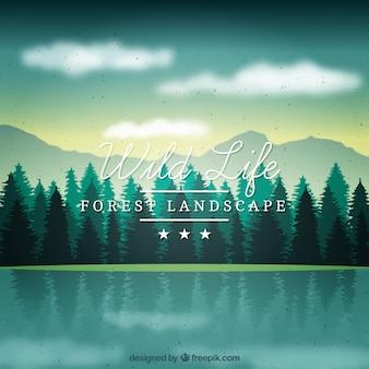 美しいスカイラインフル松の背景
