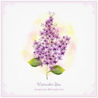 Симпатичные акварель цветок сирени