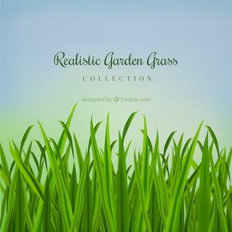 現実的な庭の草