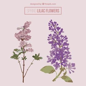 Красивые лиловые цветы