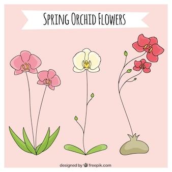 春の蘭の花