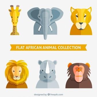 平らなアフリカの動物コレクション
