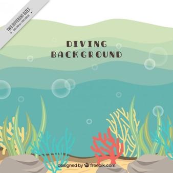 Цветные водоросли фоне подводного плавания