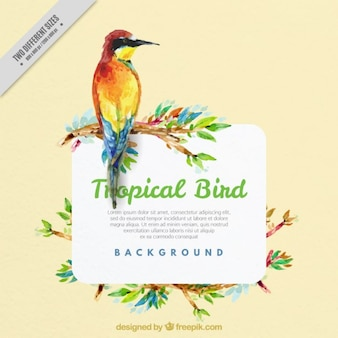 エキゾチックな鳥の水彩画の背景