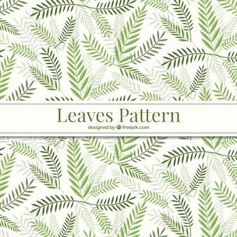 Зеленые листья шаблон