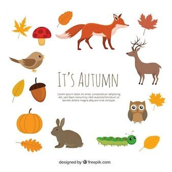 動物と秋の自然の要素
