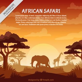 オレンジ色のトーンでアフリカのサファリ