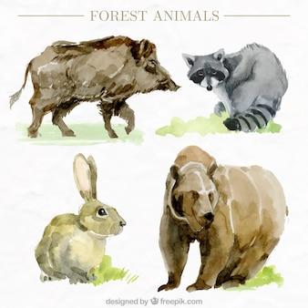 水彩画の野生動物のパック