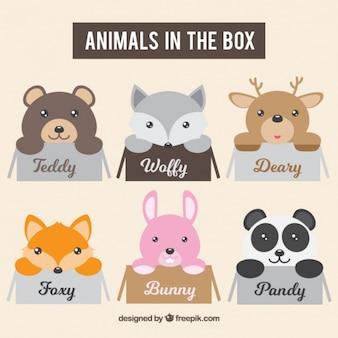 ボックス内の愛らしい動物のパック