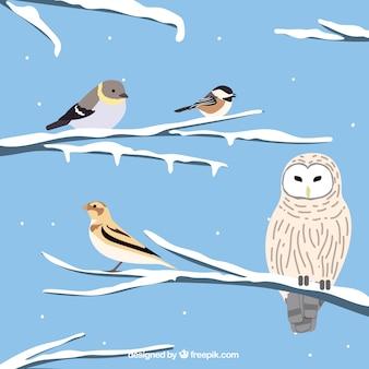 雪の枝にフクロウと鳥の背景