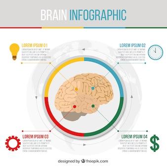 ラウンド脳インフォグラフィックテンプレート