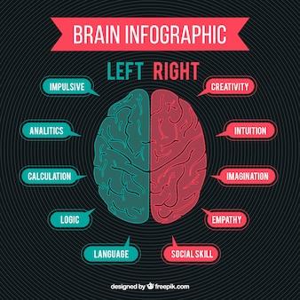 Зеленый и красный инфографики мозга человека