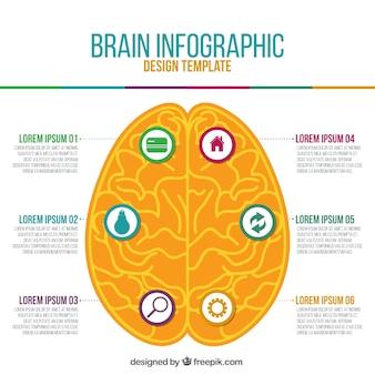 オレンジ色の人間の脳のインフォグラフィック