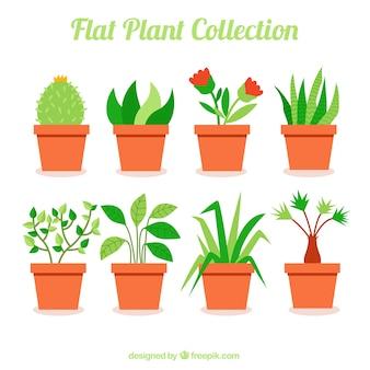 Коллекция красивых растений в плоской конструкции