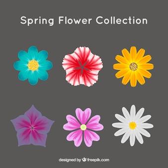 色の花のセット