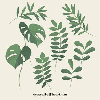 Набор красивых растений и листьев