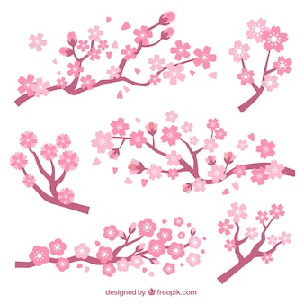 桜と枝の集合